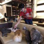 猫カフェ『 Puchi Marry 』